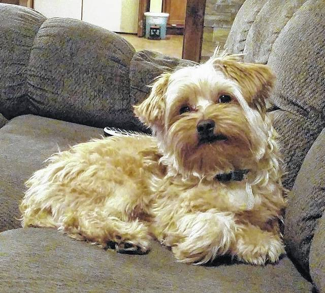 Family Offers Reward For Stolen Dog